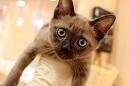 吉祥寺が猫だらけ! 日本最大級のネコイベント「吉祥寺ねこ祭り」はねこ好きの天国だった。【イベニア】