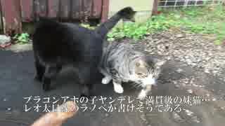 妹猫「おにいちゃんに近づいたら殺す」