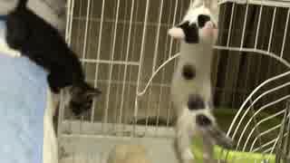 子猫の落下シーン集