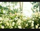 【鳥ごときが】Flowerwall~Acoustic Arran