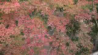 紅葉の京都(2015/11/22)