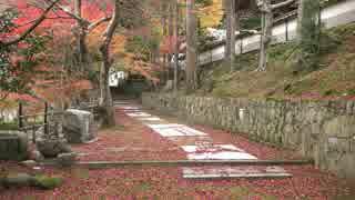 紅葉の京都(2015/11/25)