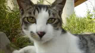 くつろぐ野良猫親子に近づいたら子猫と睨