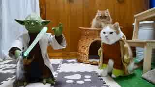 猫と犬にフォースの覚醒ならず【マンチカンズ】