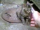 うちの猫様の一芸