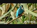 野鳥観察2015年12月23日