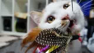 【マンチカンズ】猫一家のクリスマス