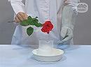 科学実験!エタノールとドライアイスで低温をつくろう!【科学でワオ!365】