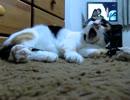 後ろで阿鼻叫喚の騒ぎなのに寝続ける猫