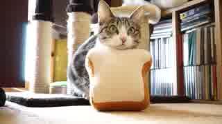 猫パンミサイル
