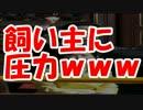 【韓国崩壊】ついに韓国が中国に反抗し始めるwww