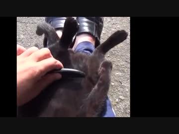 Black Cat Brushing?