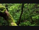 セブンスドラゴン「密林航行」をアコギで弾いてみた