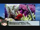 サンゴ水槽 システム紹介動画 Part3 ZEOvitシステム