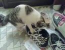 【大雪の日に救助された仔猫メイ」】 靴の中にズッポリ(='x'=)
