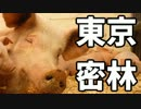 東京で弱肉強食トーキョージャングル実況プレイ【11】