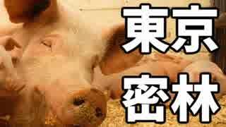 東京で弱肉強食トーキョージャングル実況