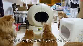 【マンチカンズ】ねこ専用排泄ポッド起動実験