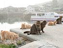 """<「週刊猫春」特典動画>島民16名、猫の数はいったい何匹……? """"猫の楽園""""青島に上陸してみた!"""
