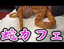 日本唯一の蛇カフェに行ってみた【レトルト・ガッチマン】