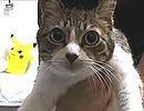 P(ピー)と猫ちゃんと筋トレ