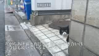 からあげ猫、跳ねる