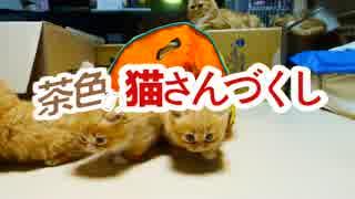 【猫アニソン】鋼の錬金術師OP READY STEA
