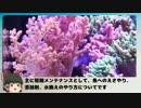 サンゴ水槽 システム紹介動画 Part6 短期水槽メンテナンス