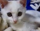 我が家の猫ちゃん動画集