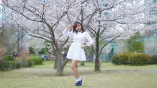 【ぽぅたん】 ハルイチ。 桜の前で 【踊ってみた】
