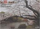 【桜前線便り】皇居・横浜・シュトゥットガルトの桜[桜H28/4/13]