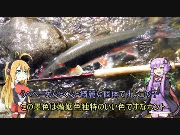 【VOICEROID実況】釣然なるままに、ゆかマキマルタスプリング!【魚釣り】