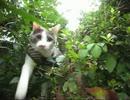 【猫が】「ちはやふる」 Perfume 「FLASH」(short ver)【散歩してみた】