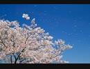 【演奏してみた】【尺八】  千本桜を吹いてみた