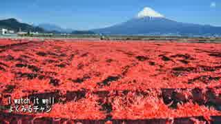 【これ食べたい】 富士の麓の桜えび、生・かき揚げ・パスタ…