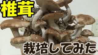 家庭で椎茸栽培してみた