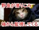 野良猫が潜り込み、袖から監視してきます。