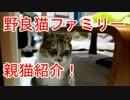 図々しく家に上がりこむ野良猫ファミリーの親猫紹介!