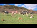 3DS『牧場物語 3つの里の大切な友だち』紹介映像第2弾