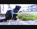 【あまがみ】 あずきの散歩 【猫旅】
