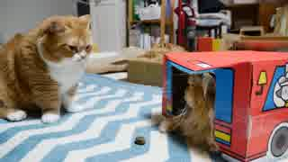 【マンチカンズ】猫一家またたびドーナツに興奮