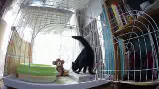 黒猫が家にやってきた!【その104】ジャン