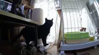 黒猫が家にやってきた!【その107】ポンち