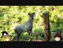 ゆっくりの田舎と自然 第4話「ぐるっと、里まわり 3の2」
