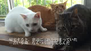 宇宙猫兄弟、新居になじみだす