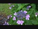 万博公園の紫陽花を見てくる