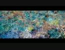 【がお】Flowerwall-Acoustic ver.-【うたった】