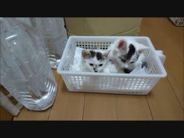 捨て猫17 ツインズ
