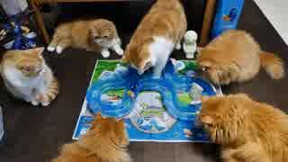 【マンチカンズ】猫がファインディングドリー