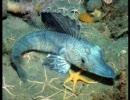 深海魚+α 写真集